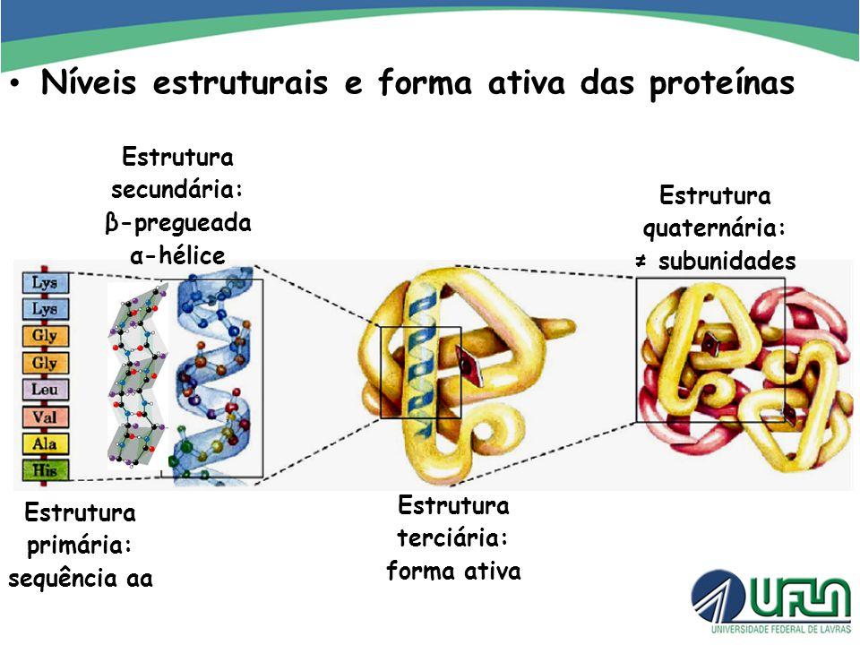 Níveis estruturais e forma ativa das proteínas Estrutura primária: sequência aa Estrutura secundária: β-pregueada α-hélice Estrutura terciária: forma