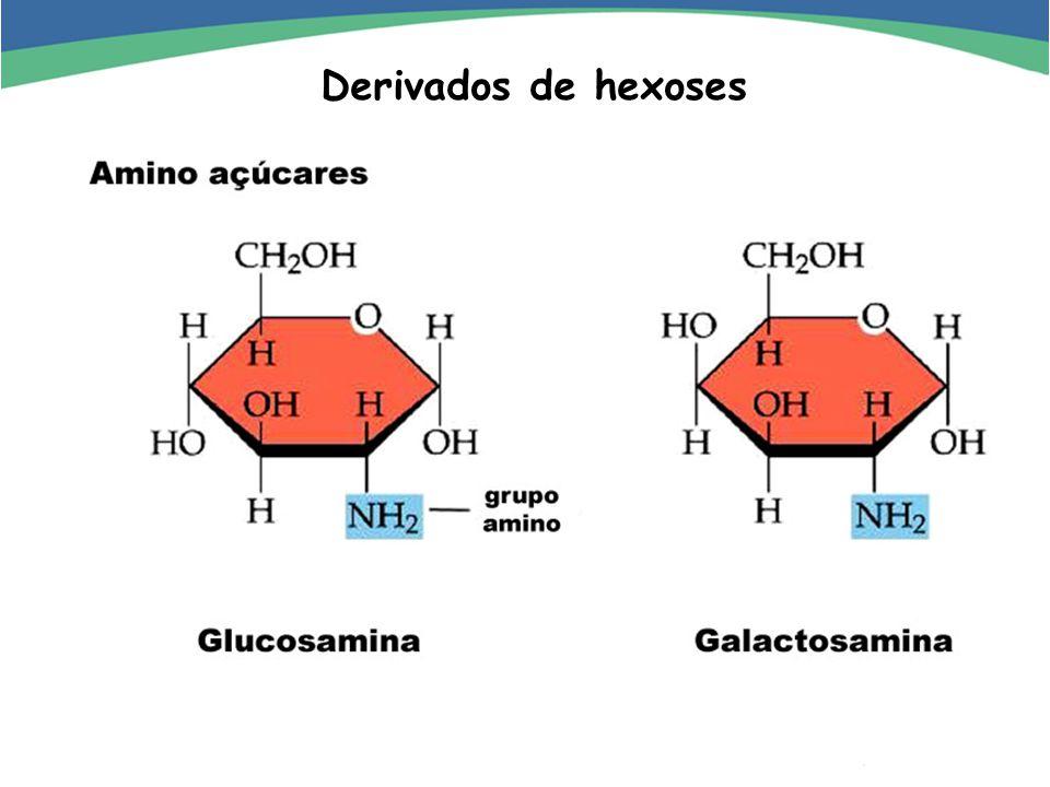 Importância metabólica e estrutural (informação) 2.2.2 Oligossacarídeos Ligação glicosídica formando cadeias curtas (2 a 20)