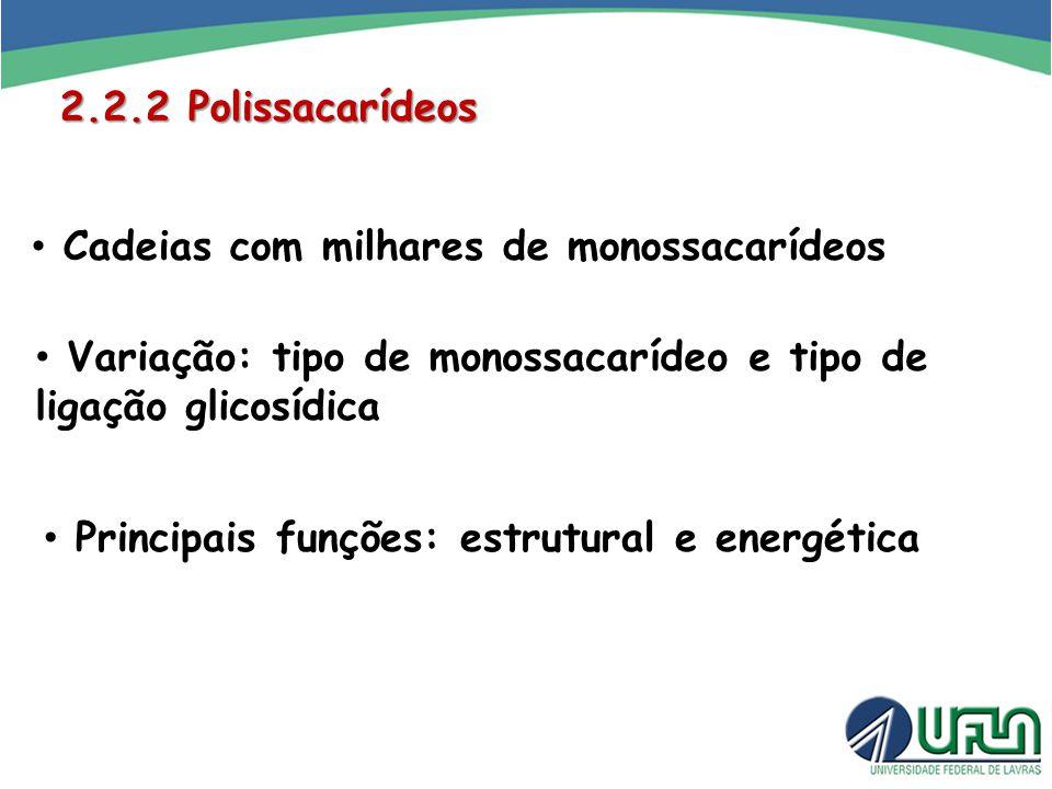 Variação: tipo de monossacarídeo e tipo de ligação glicosídica 2.2.2 Polissacarídeos 2.2.2 Polissacarídeos Cadeias com milhares de monossacarídeos Pri