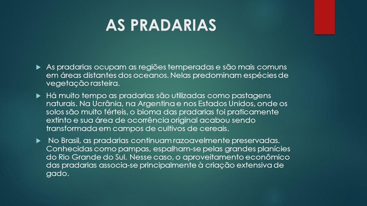 AS PRADARIAS  As pradarias ocupam as regiões temperadas e são mais comuns em áreas distantes dos oceanos. Nelas predominam espécies de vegetação rast
