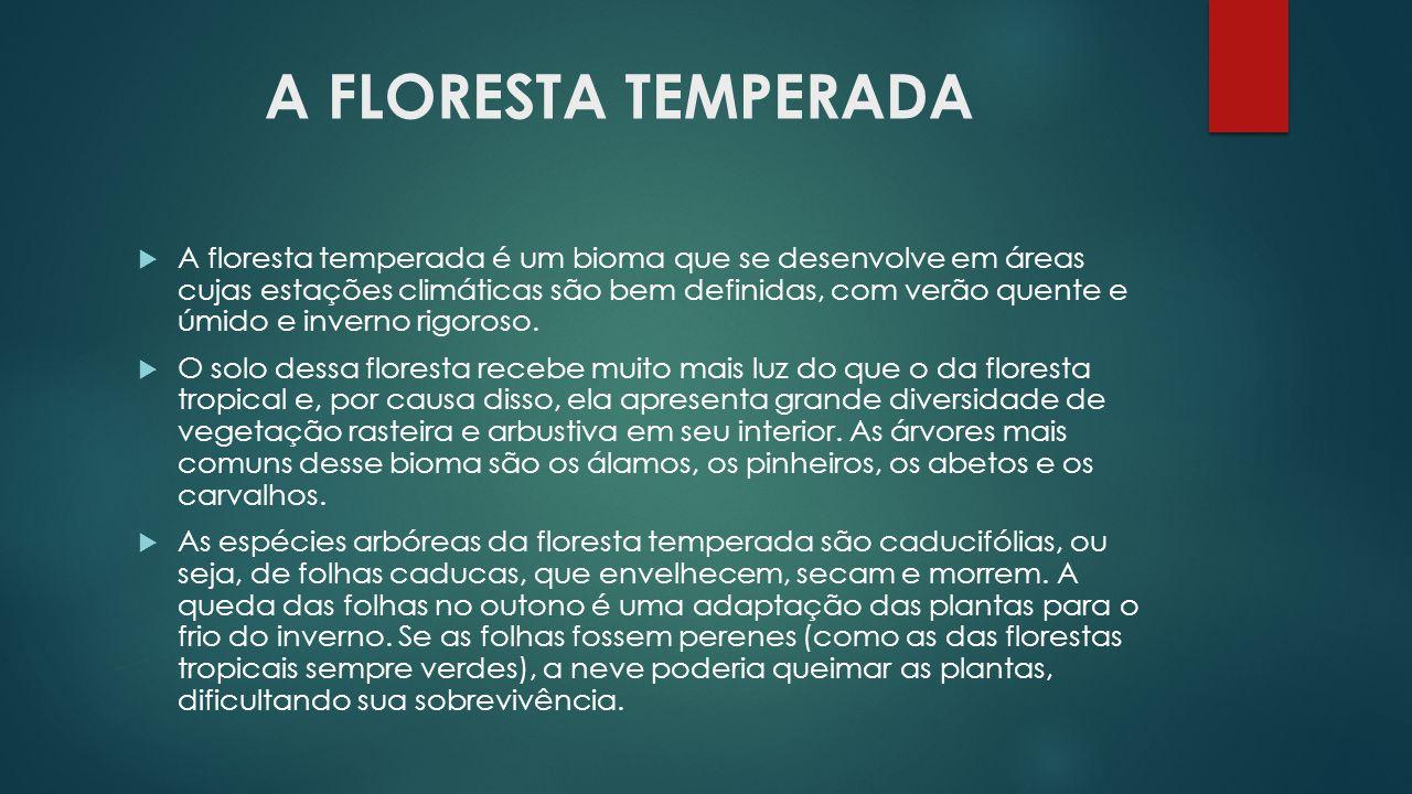 A FLORESTA TEMPERADA  A floresta temperada é um bioma que se desenvolve em áreas cujas estações climáticas são bem definidas, com verão quente e úmid