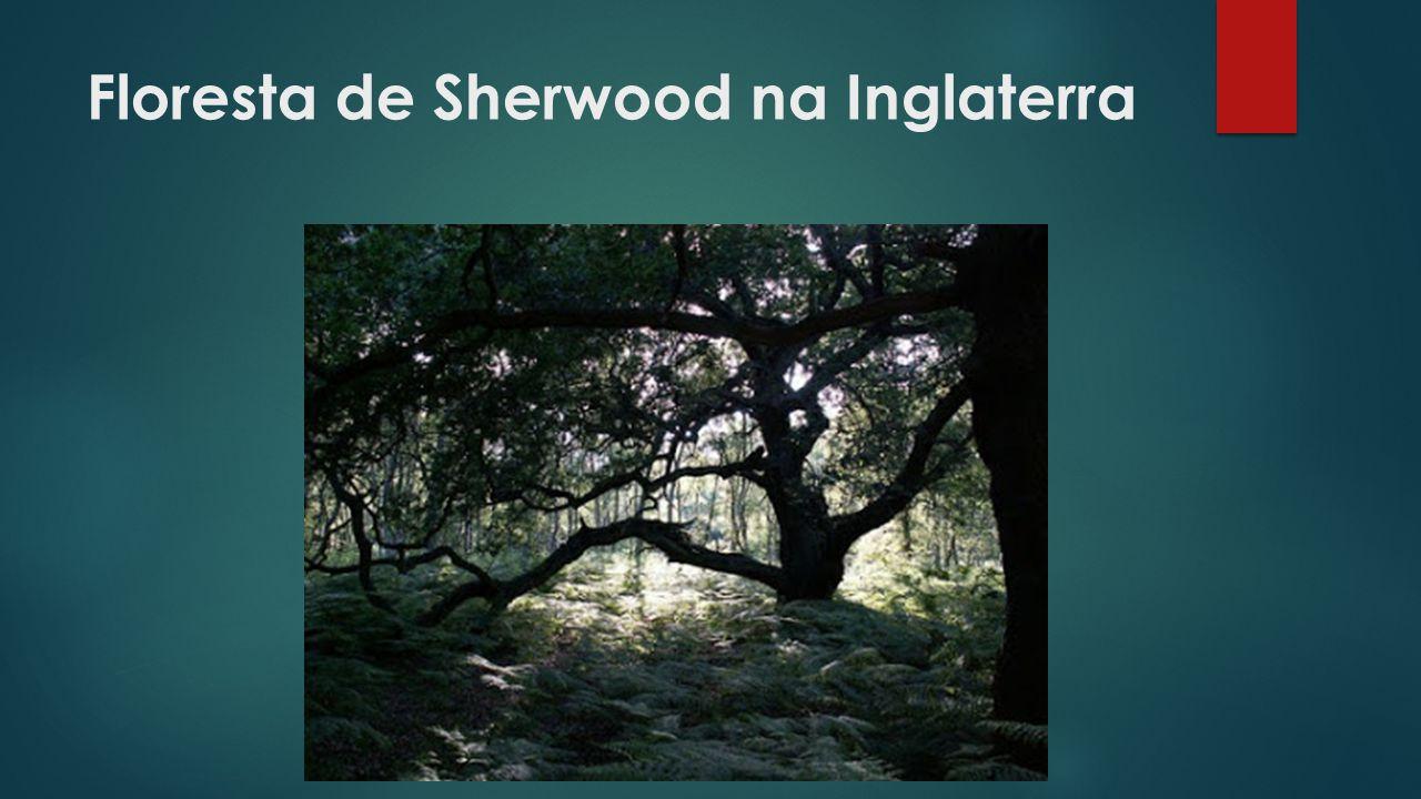 Floresta de Sherwood na Inglaterra