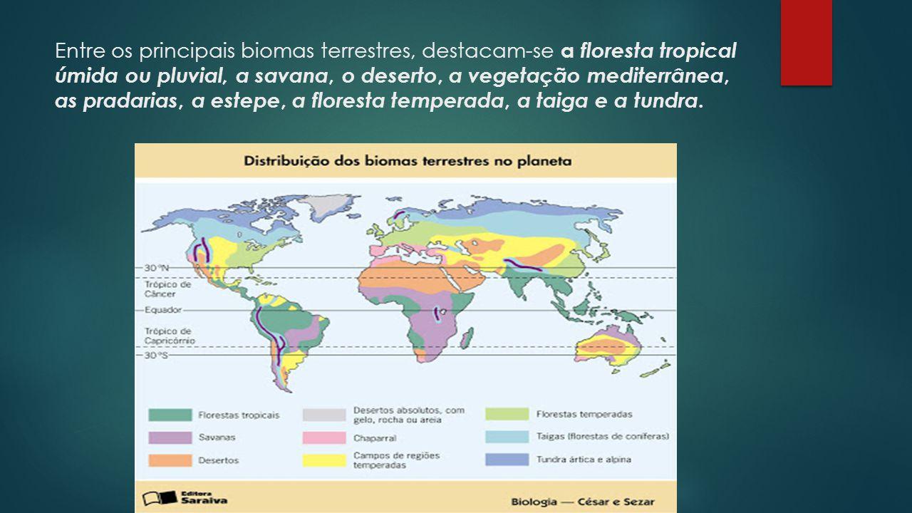 Entre os principais biomas terrestres, destacam-se a floresta tropical úmida ou pluvial, a savana, o deserto, a vegetação mediterrânea, as pradarias,