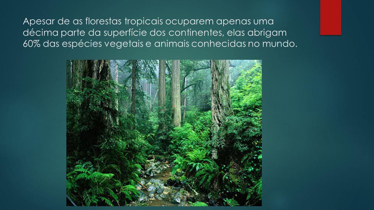 Apesar de as florestas tropicais ocuparem apenas uma décima parte da superfície dos continentes, elas abrigam 60% das espécies vegetais e animais conh