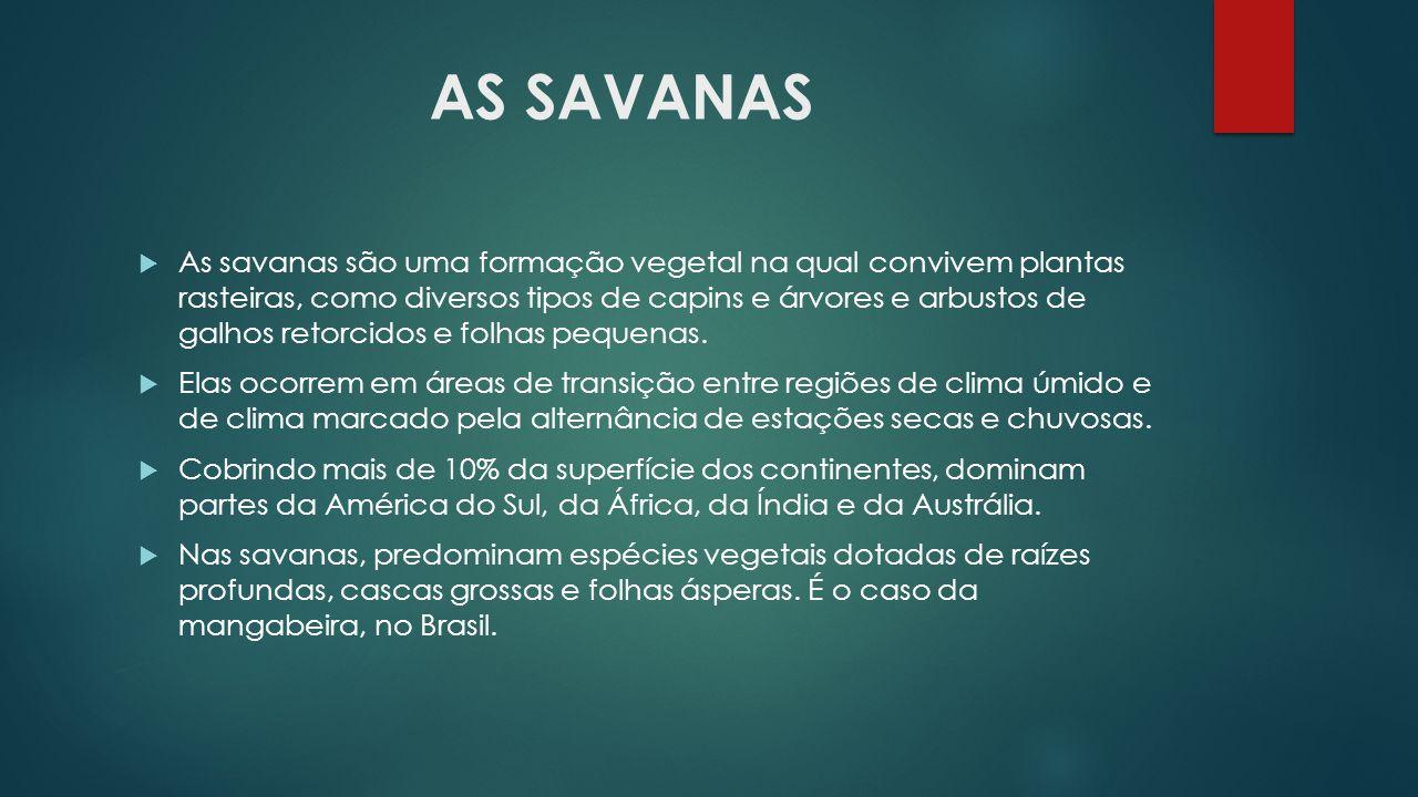 AS SAVANAS  As savanas são uma formação vegetal na qual convivem plantas rasteiras, como diversos tipos de capins e árvores e arbustos de galhos reto