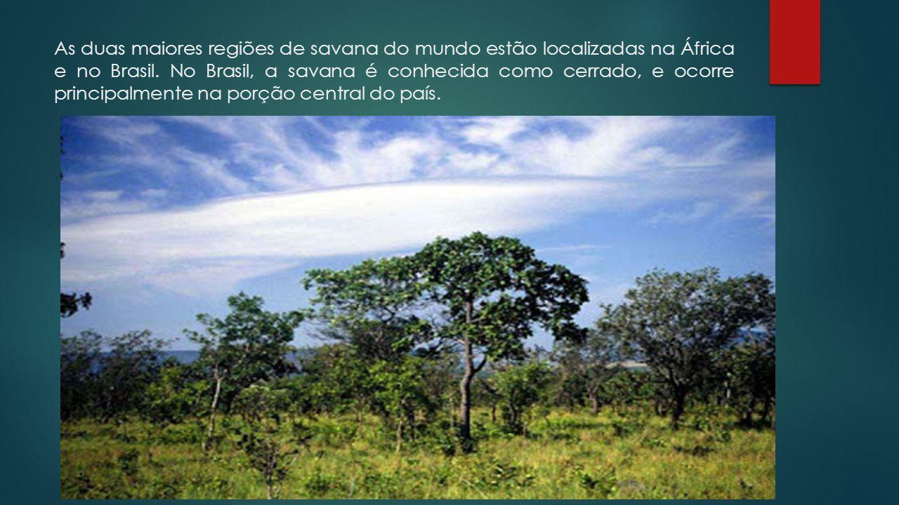 As duas maiores regiões de savana do mundo estão localizadas na África e no Brasil. No Brasil, a savana é conhecida como cerrado, e ocorre principalme