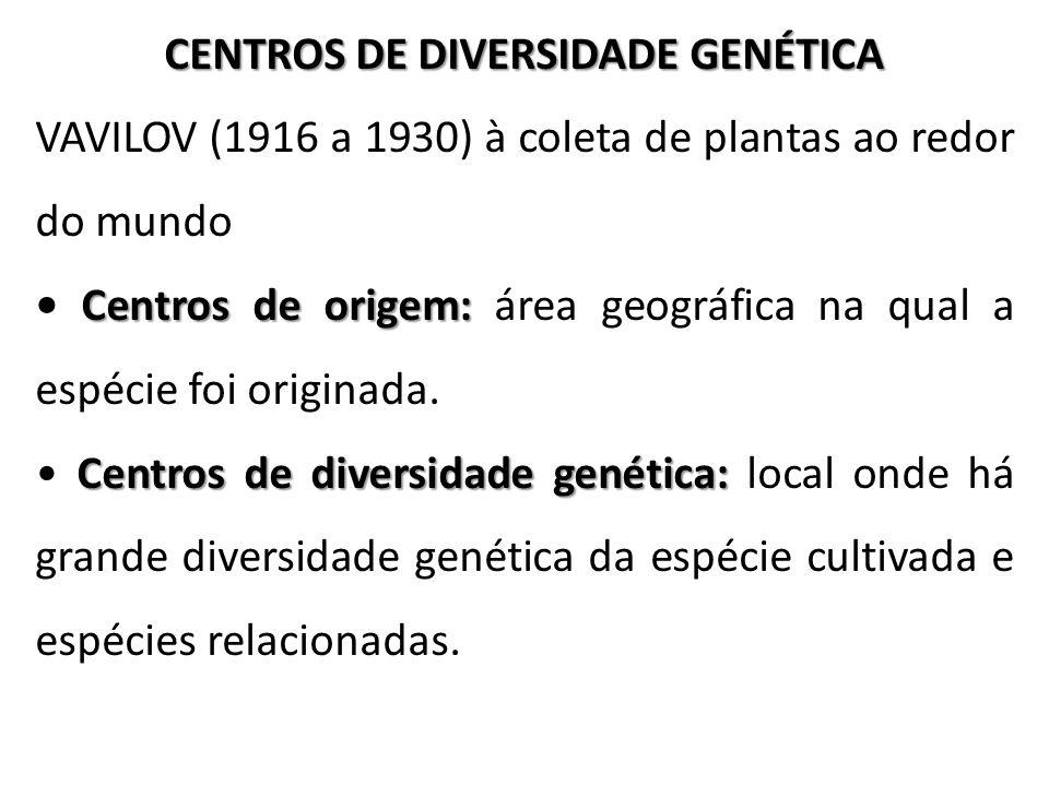 CENTROS DE DIVERSIDADE GENÉTICA VAVILOV (1916 a 1930) à coleta de plantas ao redor do mundo Centros de origem: Centros de origem: área geográfica na q