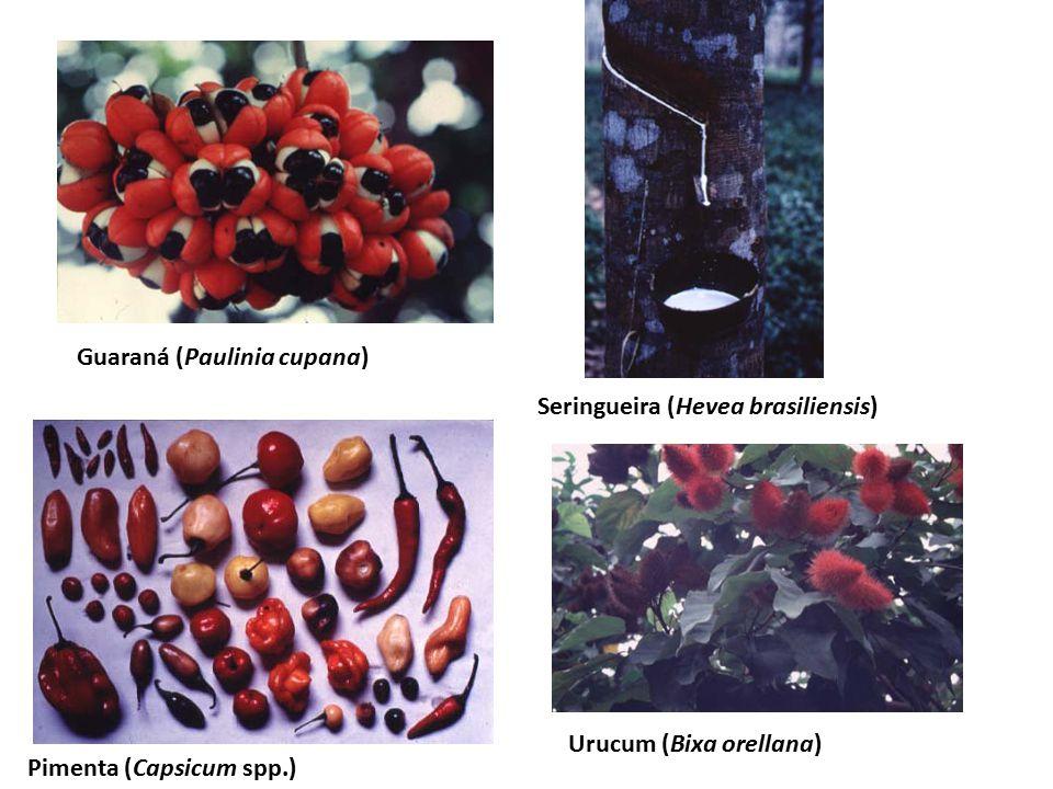 Guaraná (Paulinia cupana) Seringueira (Hevea brasiliensis) Pimenta (Capsicum spp.) Urucum (Bixa orellana)
