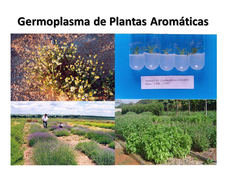 Germoplasma de Plantas Aromáticas