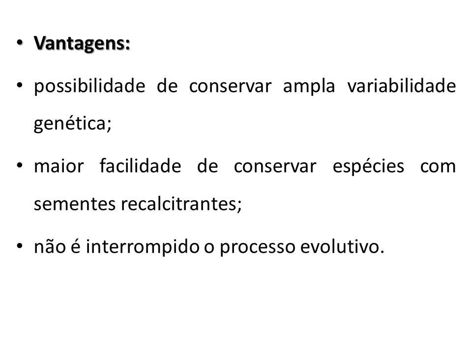 Vantagens: Vantagens: possibilidade de conservar ampla variabilidade genética; maior facilidade de conservar espécies com sementes recalcitrantes; não