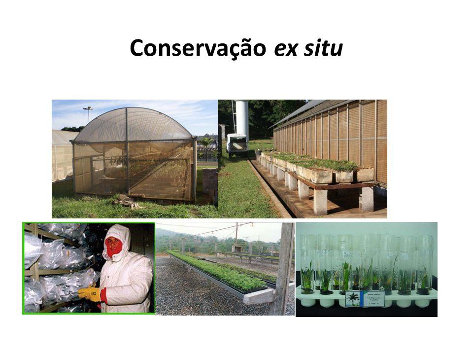 Conservação ex situ