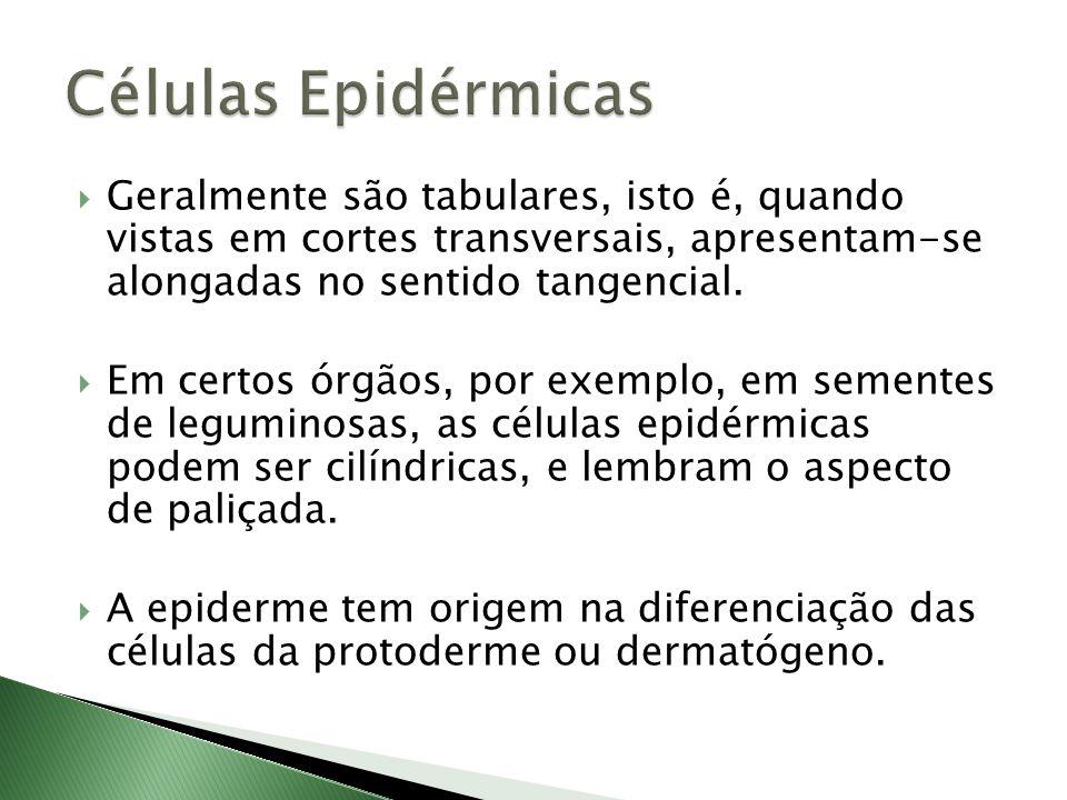  Embora na maioria dos casos sejam constituídas por apenas uma única camada de células, há casos de epiderme com mais de um extrato celular.