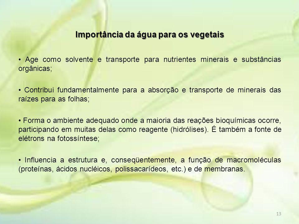 Importância da água para os vegetais Age como solvente e transporte para nutrientes minerais e substâncias orgânicas; Contribui fundamentalmente para