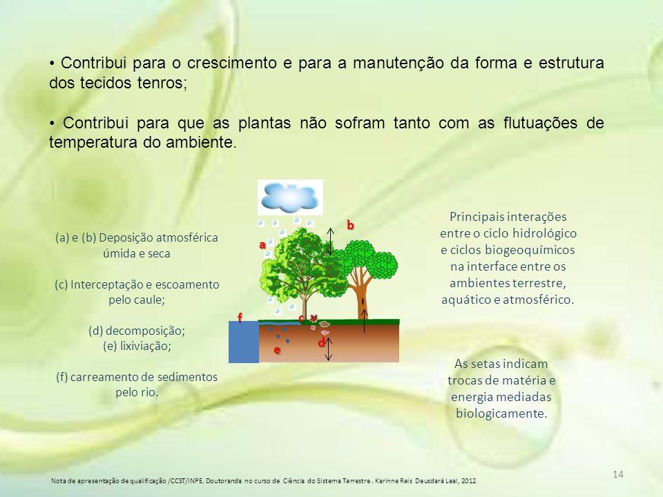 Contribui para o crescimento e para a manutenção da forma e estrutura dos tecidos tenros; Contribui para que as plantas não sofram tanto com as flutua