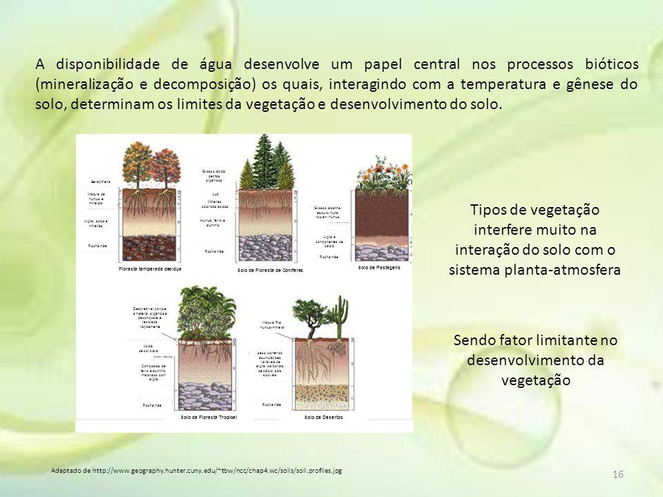 Adaptado de http://www.geography.hunter.cuny.edu/~tbw/ncc/chap4.wc/soils/soil.profiles.jpg A disponibilidade de água desenvolve um papel central nos p