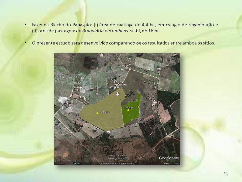 21 Fazenda Riacho do Papagaio: (i) área de caatinga de 4,4 ha, em estágio de regeneração e (ii) área de pastagem de Braquiária decumbens Stabf, de 16