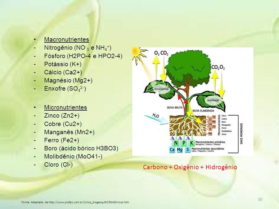 Macronutrientes -Nitrogênio (NO - 3 e NH 4 + ) -Fósforo (H2PO-4 e HPO2-4) -Potássio (K+) -Cálcio (Ca2+) -Magnésio (Mg2+) -Enxofre (SO 4 2- ) Micronutr