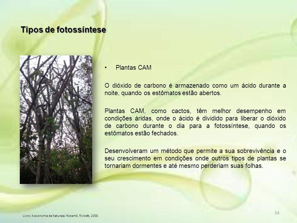 34 Plantas CAM O dióxido de carbono é armazenado como um ácido durante a noite, quando os estômatos estão abertos. Plantas CAM, como cactos, têm melho