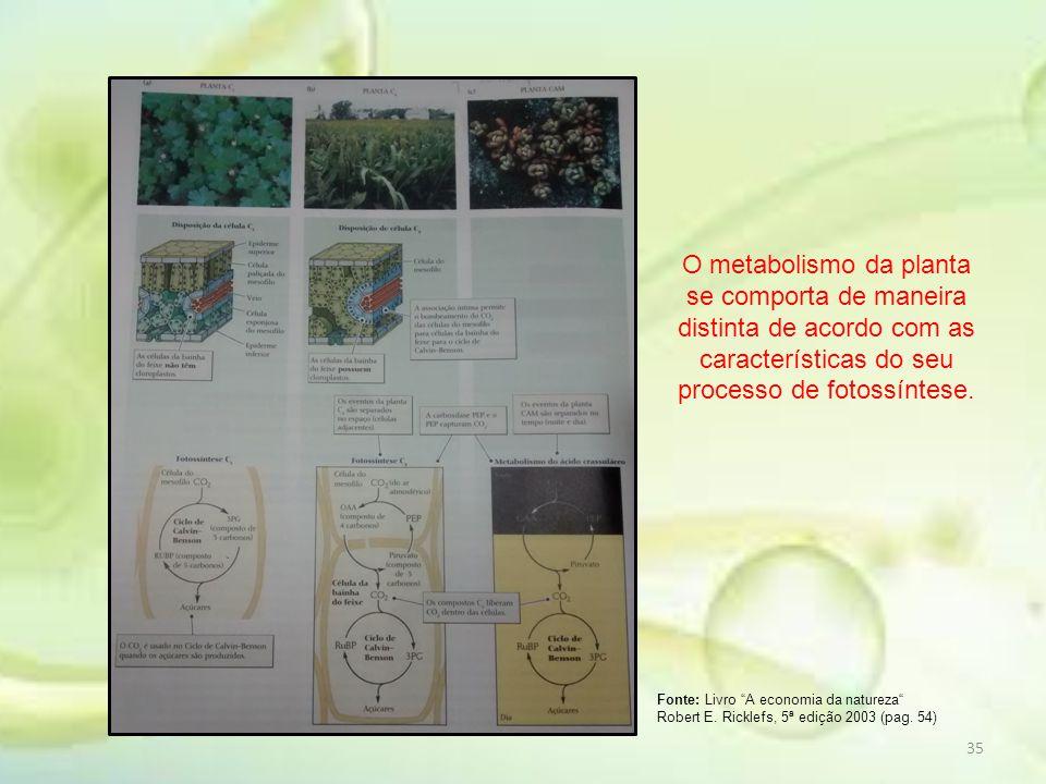 """35 Fonte: Livro """"A economia da natureza"""" Robert E. Ricklefs, 5ª edição 2003 (pag. 54) O metabolismo da planta se comporta de maneira distinta de acord"""