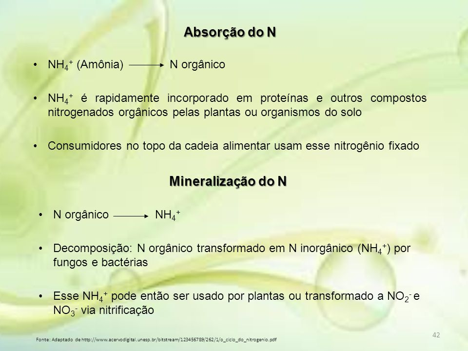 42 Absorção do N NH 4 + (Amônia) N orgânico NH 4 + é rapidamente incorporado em proteínas e outros compostos nitrogenados orgânicos pelas plantas ou o