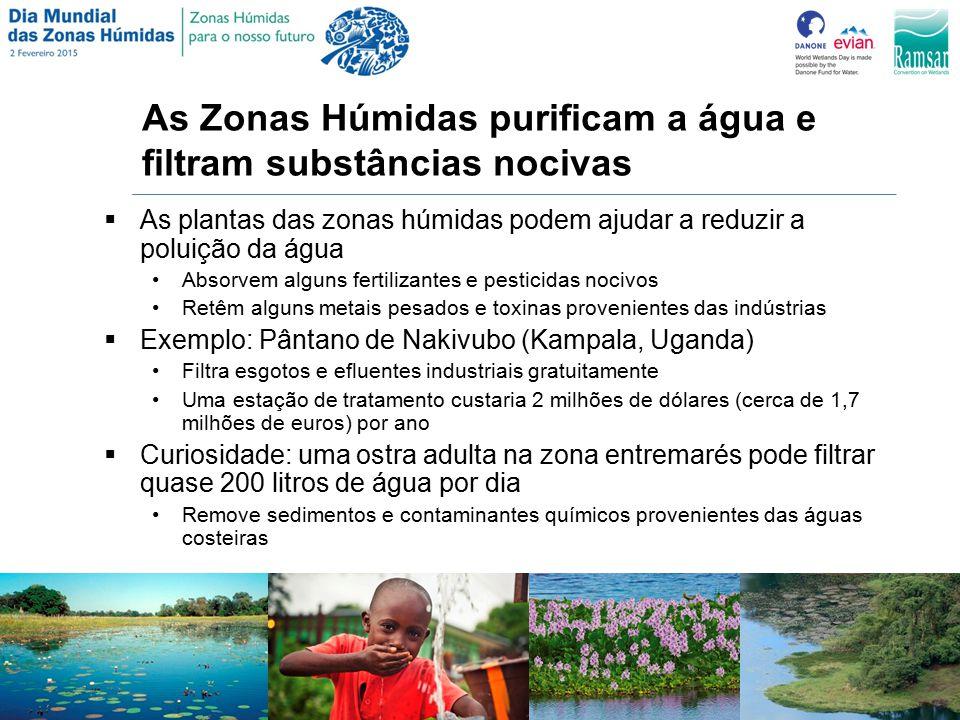 As Zonas Húmidas purificam a água e filtram substâncias nocivas  As plantas das zonas húmidas podem ajudar a reduzir a poluição da água Absorvem alguns fertilizantes e pesticidas nocivos Retêm alguns metais pesados e toxinas provenientes das indústrias  Exemplo: Pântano de Nakivubo (Kampala, Uganda) Filtra esgotos e efluentes industriais gratuitamente Uma estação de tratamento custaria 2 milhões de dólares (cerca de 1,7 milhões de euros) por ano  Curiosidade: uma ostra adulta na zona entremarés pode filtrar quase 200 litros de água por dia Remove sedimentos e contaminantes químicos provenientes das águas costeiras