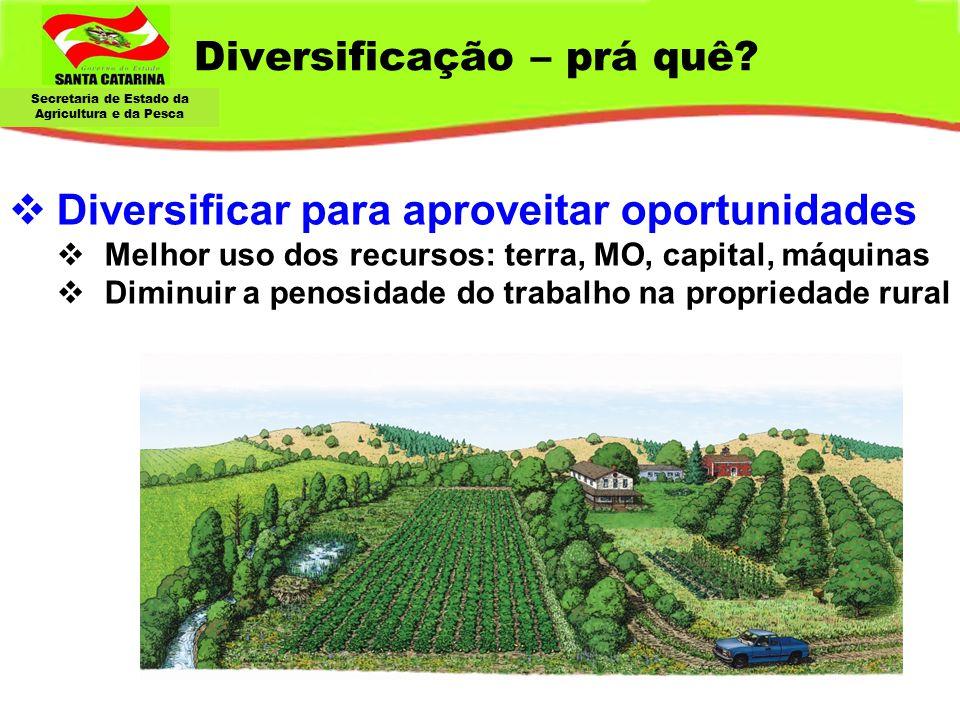 Secretaria de Estado da Agricultura e da Pesca  Diversificar para aproveitar oportunidades  Melhor uso dos recursos: terra, MO, capital, máquinas 