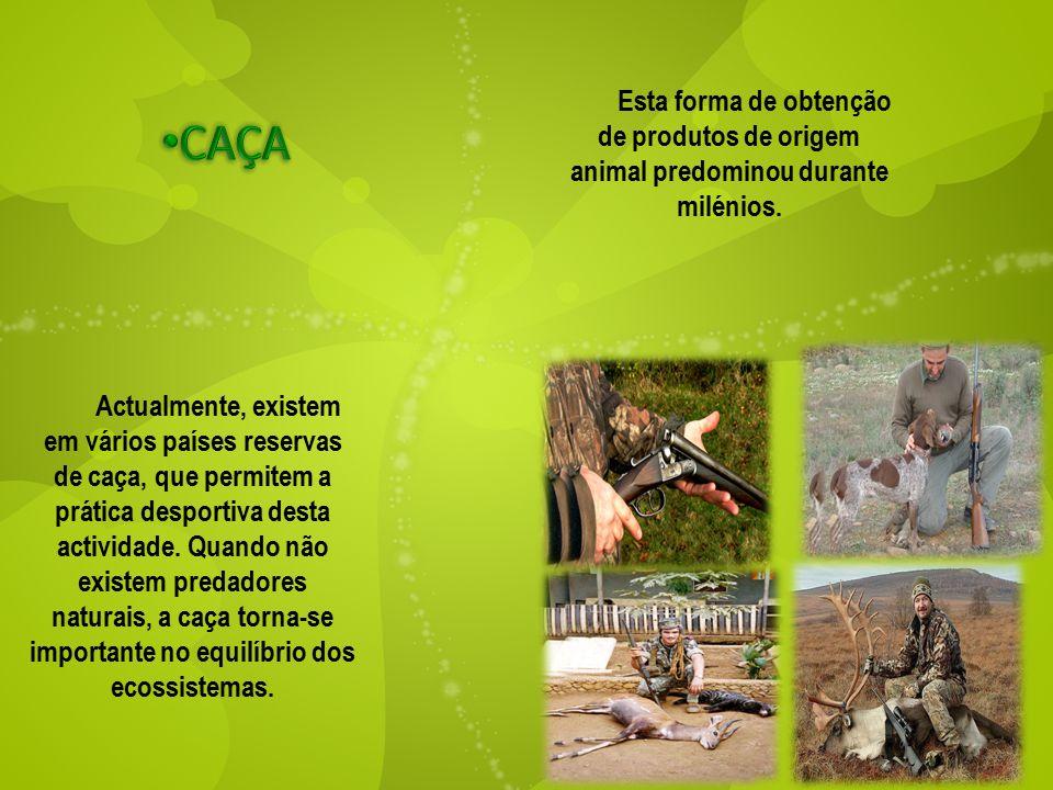 Esta forma de obtenção de produtos de origem animal predominou durante milénios. Actualmente, existem em vários países reservas de caça, que permitem