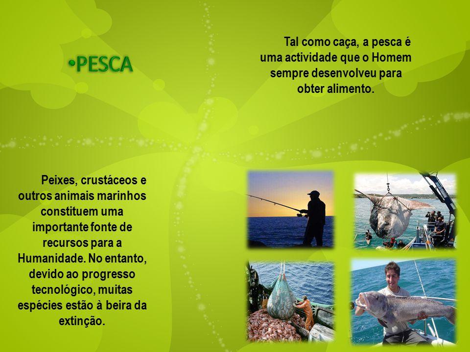 Tal como caça, a pesca é uma actividade que o Homem sempre desenvolveu para obter alimento. Peixes, crustáceos e outros animais marinhos constituem um