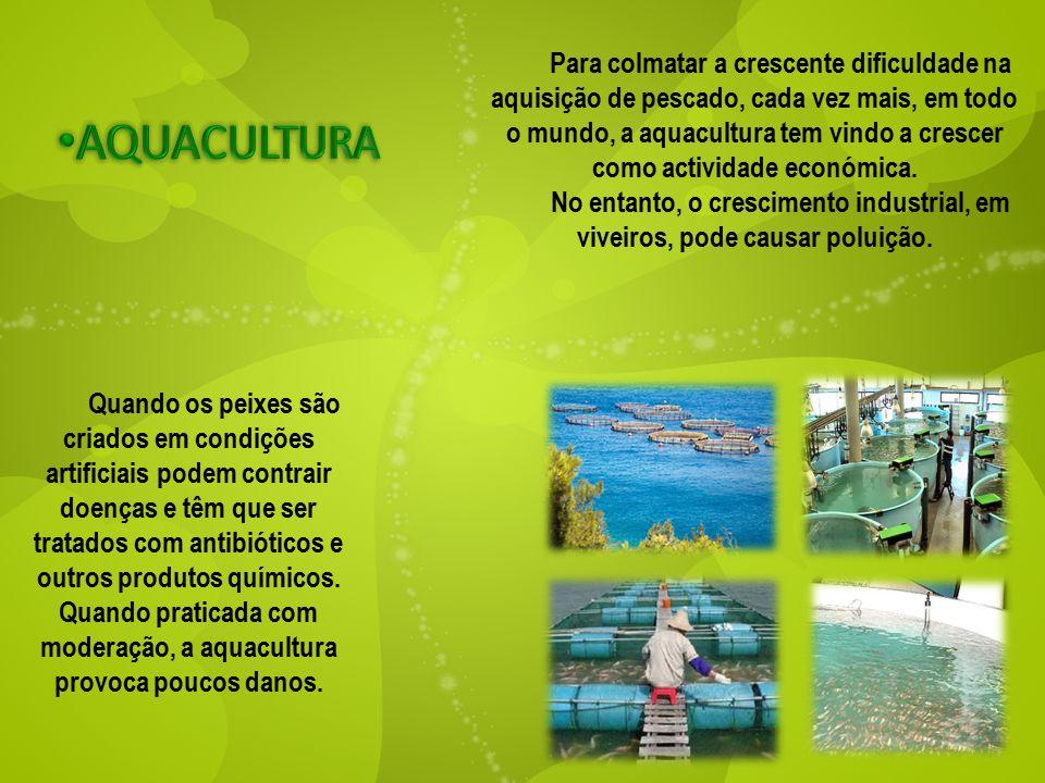 Para colmatar a crescente dificuldade na aquisição de pescado, cada vez mais, em todo o mundo, a aquacultura tem vindo a crescer como actividade econó