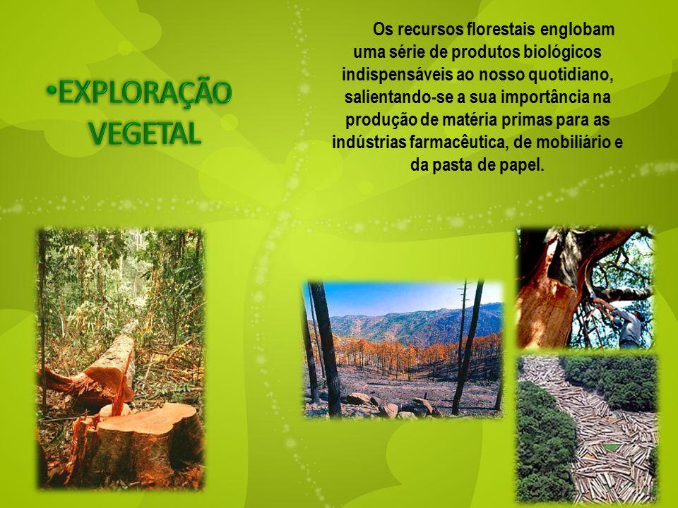 Os recursos florestais englobam uma série de produtos biológicos indispensáveis ao nosso quotidiano, salientando-se a sua importância na produção de m