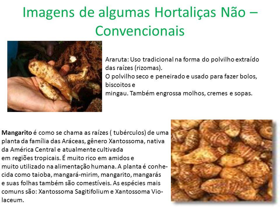 Imagens de algumas Hortaliças Não – Convencionais Araruta: Uso tradicional na forma do polvilho extraído das raízes (rizomas). O polvilho seco e penei