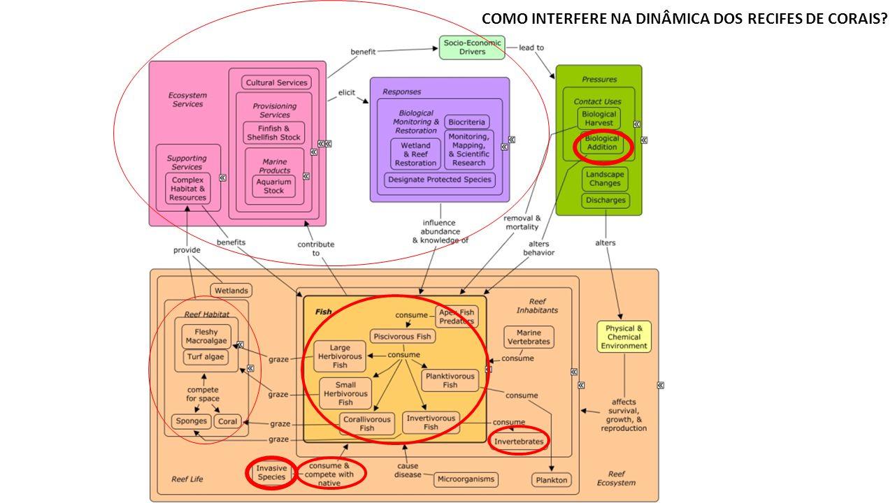 COMO INTERFERE NA DINÂMICA DOS RECIFES DE CORAIS?