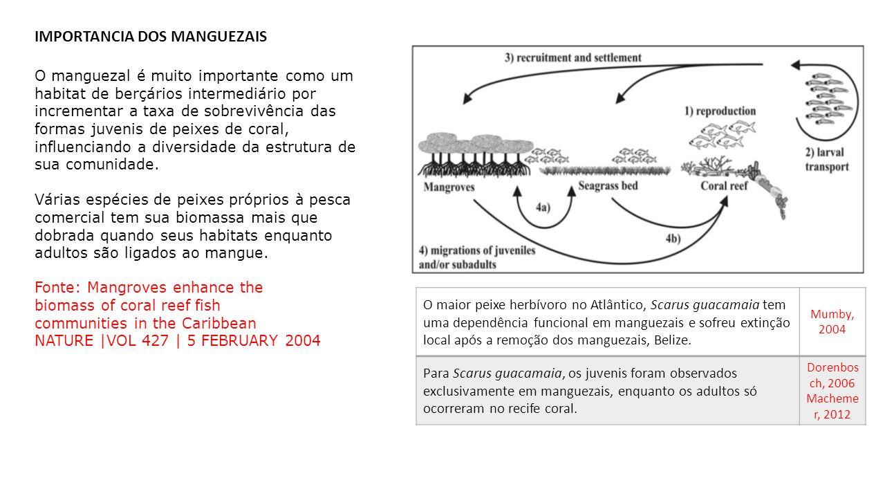IMPORTANCIA DOS MANGUEZAIS O maior peixe herbívoro no Atlântico, Scarus guacamaia tem uma dependência funcional em manguezais e sofreu extinção local