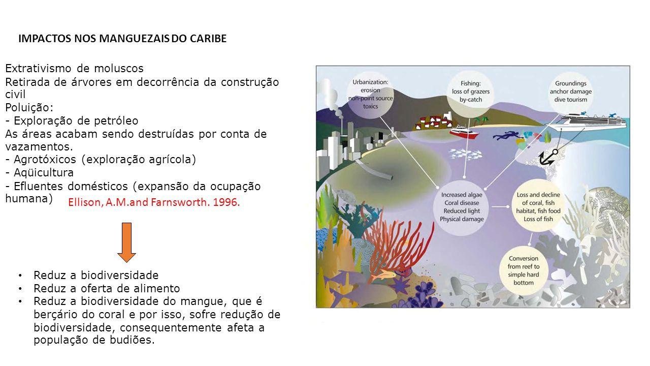 IMPACTOS NOS MANGUEZAIS DO CARIBE Extrativismo de moluscos Retirada de árvores em decorrência da construção civil Poluição: - Exploração de petróleo A