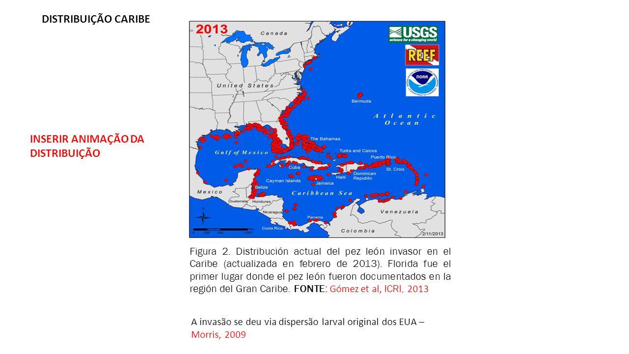 DISTRIBUIÇÃO CARIBE Figura 2. Distribución actual del pez león invasor en el Caribe (actualizada en febrero de 2013). Florida fue el primer lugar dond