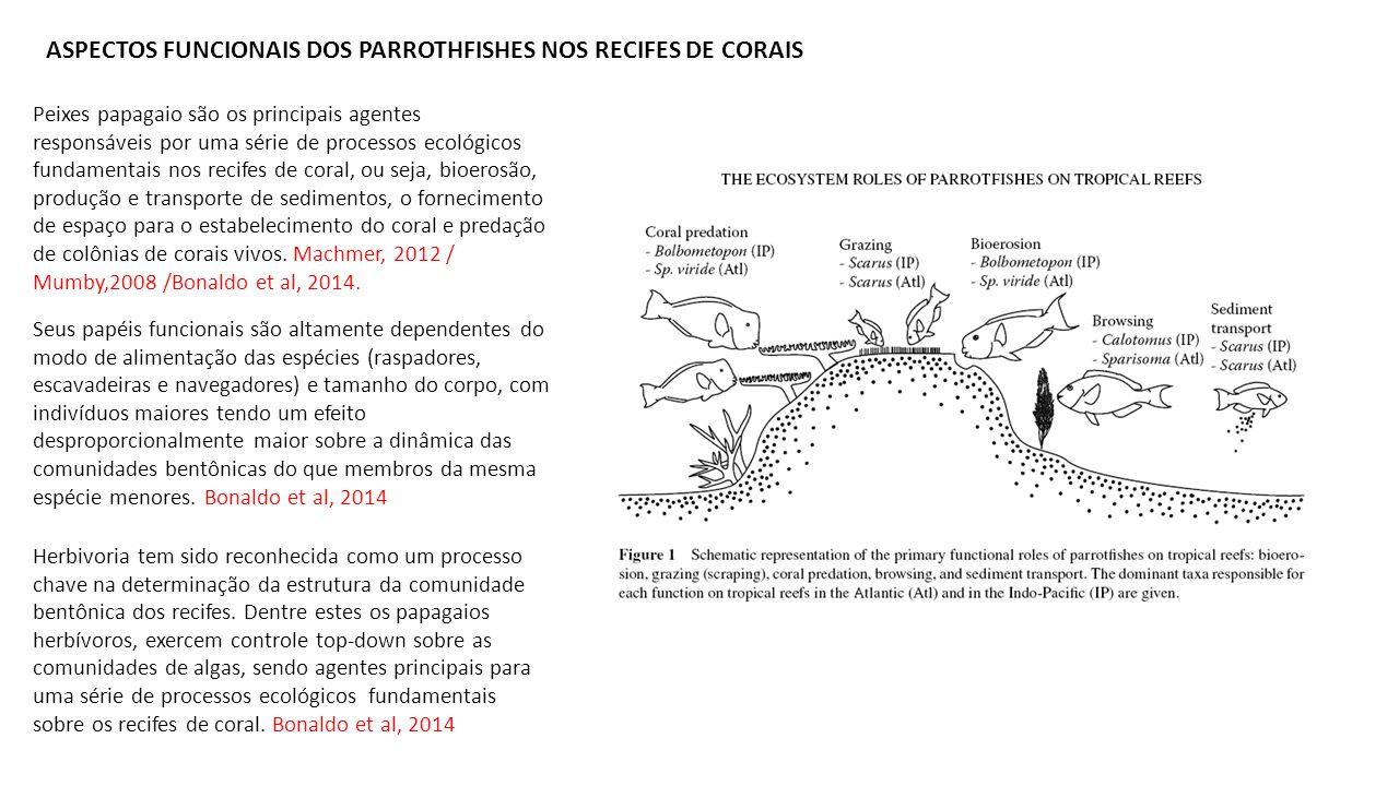 ASPECTOS FUNCIONAIS DOS PARROTHFISHES NOS RECIFES DE CORAIS Peixes papagaio são os principais agentes responsáveis por uma série de processos ecológ