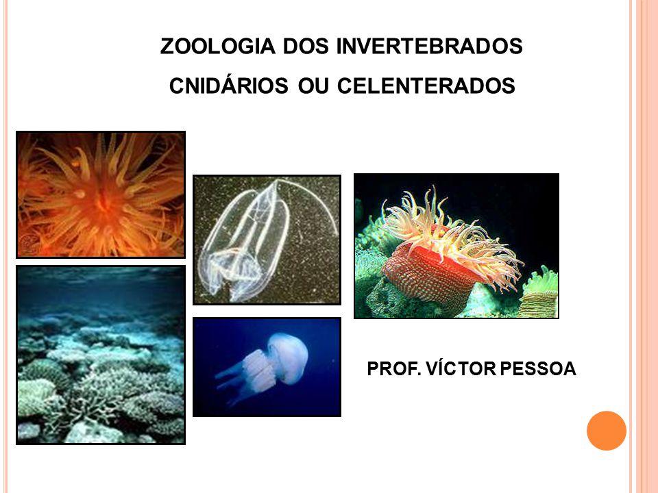 ZOOLOGIA DOS INVERTEBRADOS CNIDÁRIOS OU CELENTERADOS PROF. VÍCTOR PESSOA
