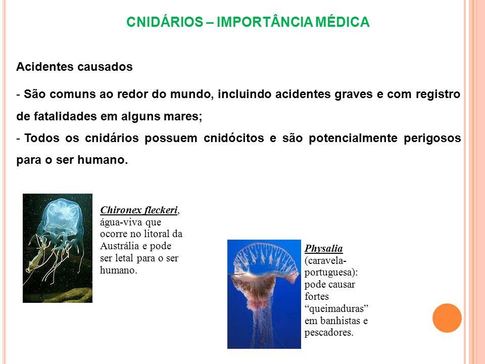 CNIDÁRIOS – IMPORTÂNCIA MÉDICA Acidentes causados - São comuns ao redor do mundo, incluindo acidentes graves e com registro de fatalidades em alguns m
