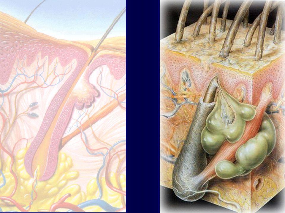 Asebiol- hidrolisado de proteínas, ação adstringente Bioecolia- protetor flora natural da pele Biopol OE- agente antioleosidad ação mecânica DSBC- ácido salicílico, ação queratolítica, antiinflamatória e antiedema PRINCÍPIOS ATIVOS MAIS UTILIZADOS www.mfatima.com.br