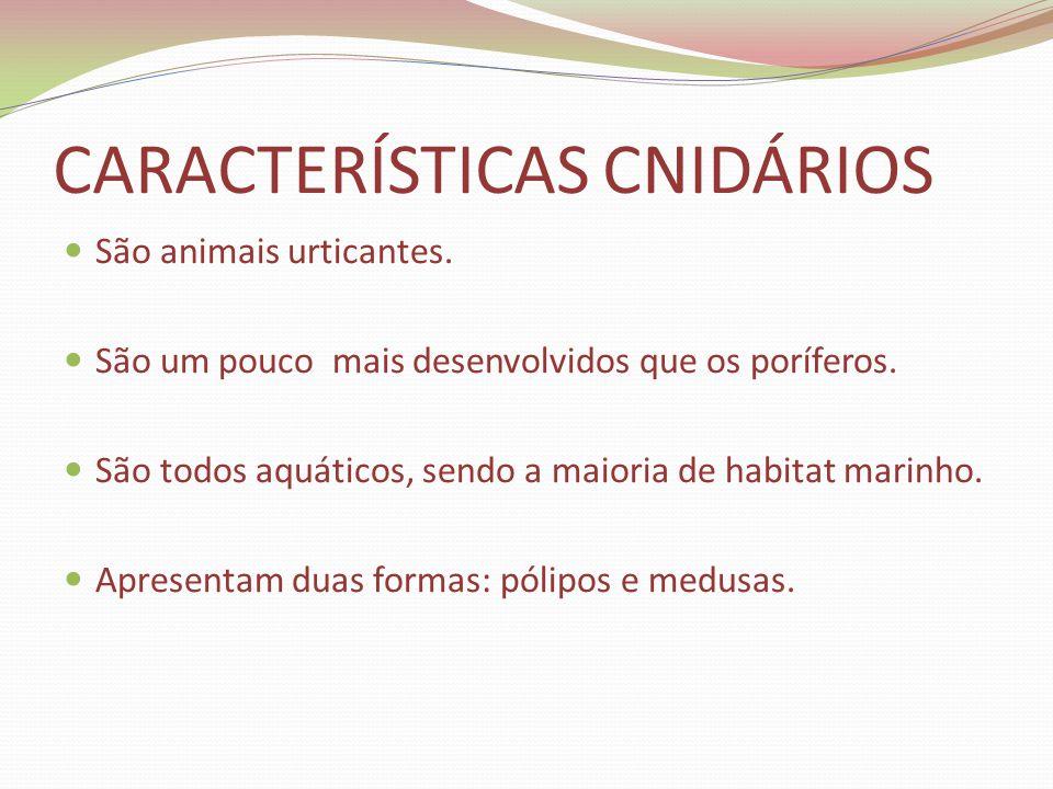 CARACTERÍSTICAS CNIDÁRIOS São animais urticantes. São um pouco mais desenvolvidos que os poríferos. São todos aquáticos, sendo a maioria de habitat ma