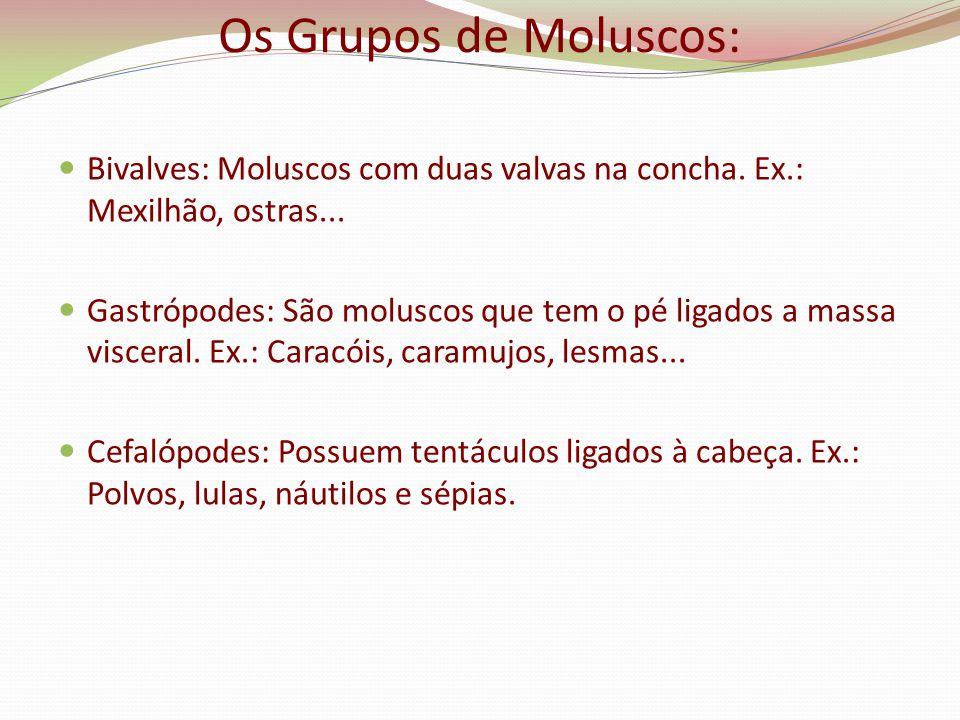 Os Grupos de Moluscos: Bivalves: Moluscos com duas valvas na concha. Ex.: Mexilhão, ostras... Gastrópodes: São moluscos que tem o pé ligados a massa v