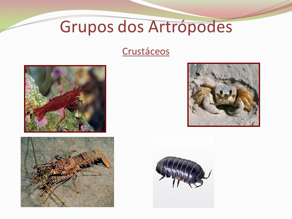 Grupos dos Artrópodes Crustáceos