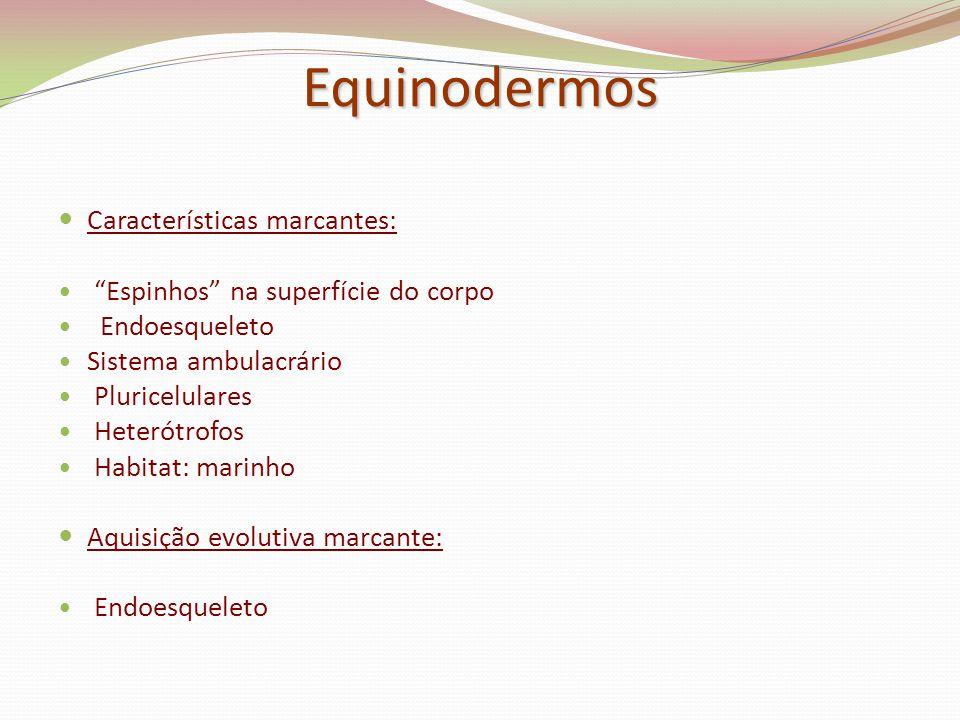 "Equinodermos Características marcantes: ""Espinhos"" na superfície do corpo Endoesqueleto Sistema ambulacrário Pluricelulares Heterótrofos Habitat: mari"