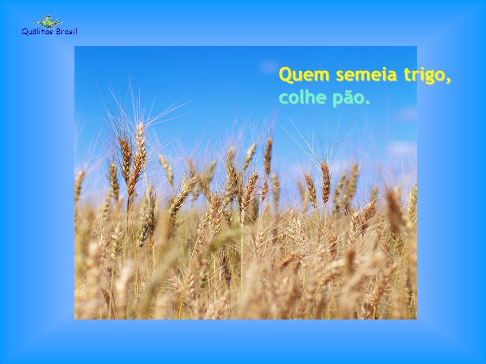 Quem planta flores, colhe perfume. Quälitas Brasil