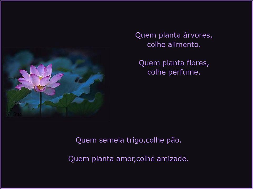Quem planta árvores, colhe alimento.Quem planta flores, colhe perfume.
