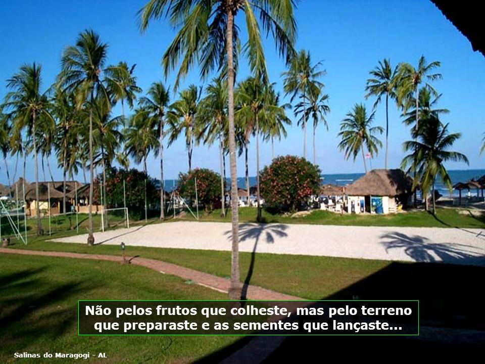 Salinas do Maragogi - AL Não pelos frutos que colheste, mas pelo terreno que preparaste e as sementes que lançaste...