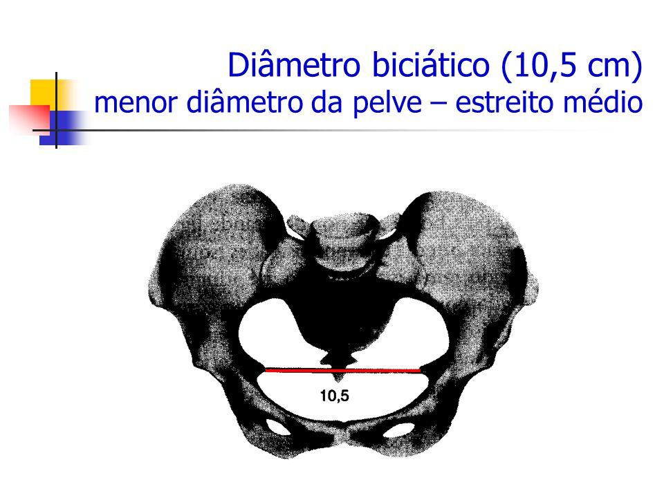 BACIA OBSTÉTRICA - ESTREITO MÉDIO Diâmetro biciático (10,5 cm) menor diâmetro da pelve – estreito médio