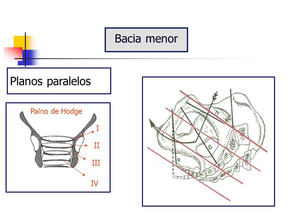 Linha que corta ao meio os diversos planos da bacia Apresenta duas orientações  perpendicular (até o estreito médio)  anterior Bacia menor Eixo bacia Linha de insinuação e descida Linha de desprendimento