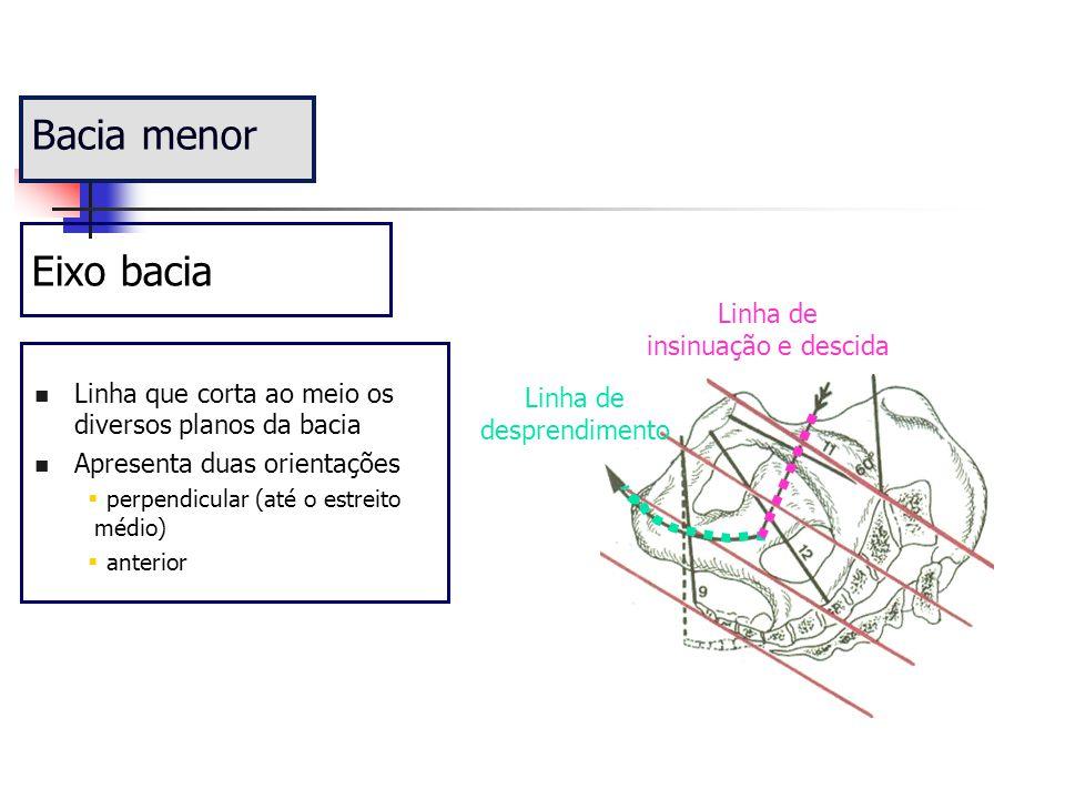 Linha que corta ao meio os diversos planos da bacia Apresenta duas orientações  perpendicular (até o estreito médio)  anterior Bacia menor Eixo baci