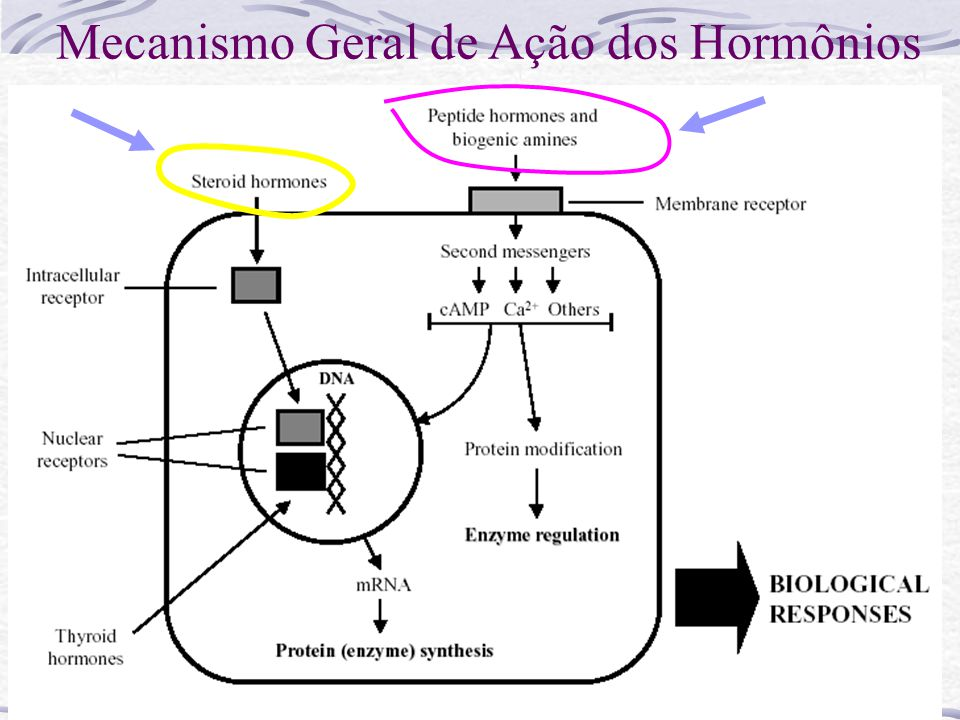 Mecanismo Geral de Ação dos Hormônios